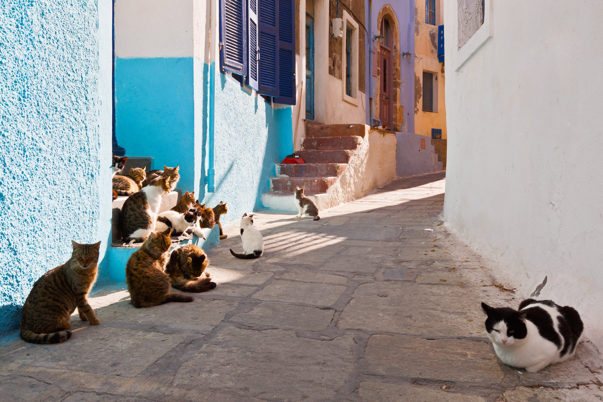 Cats in a street of Mandraki village on Nisyros island