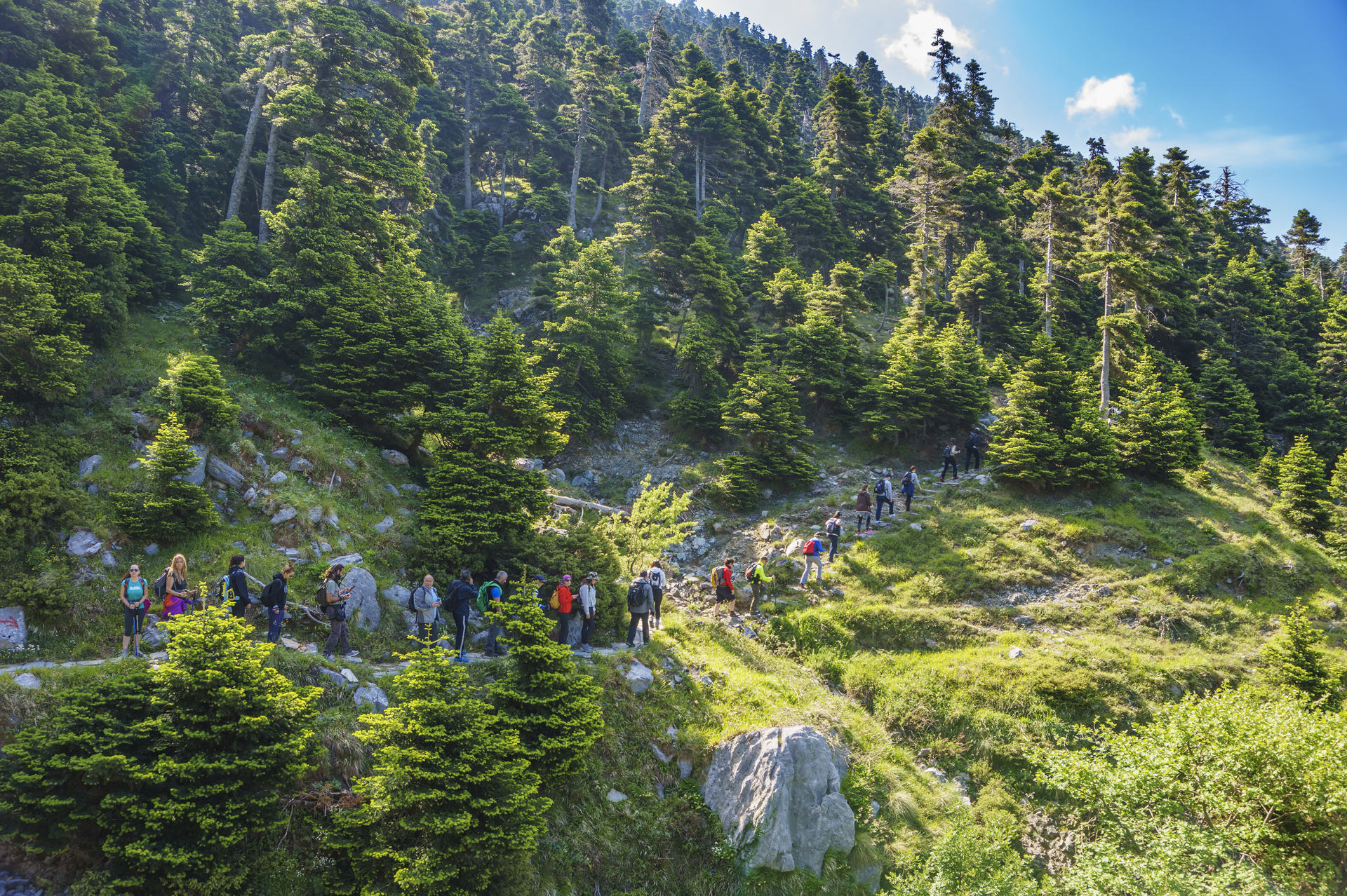 The famous Dirfys forest. It is a natural forest located on a mountain in the central part of the island of Euboea, Greece at 1,743 m elevation.The path leads to Agali Canyon.