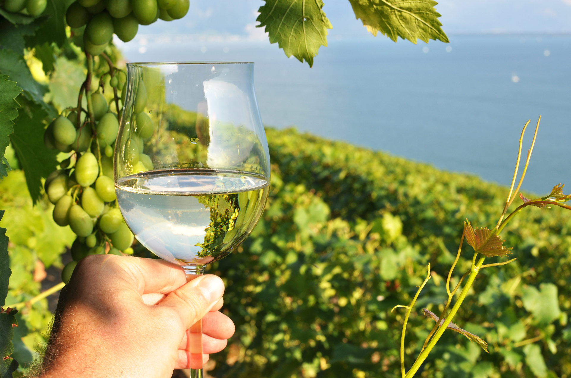 Wineglass with vineyards background