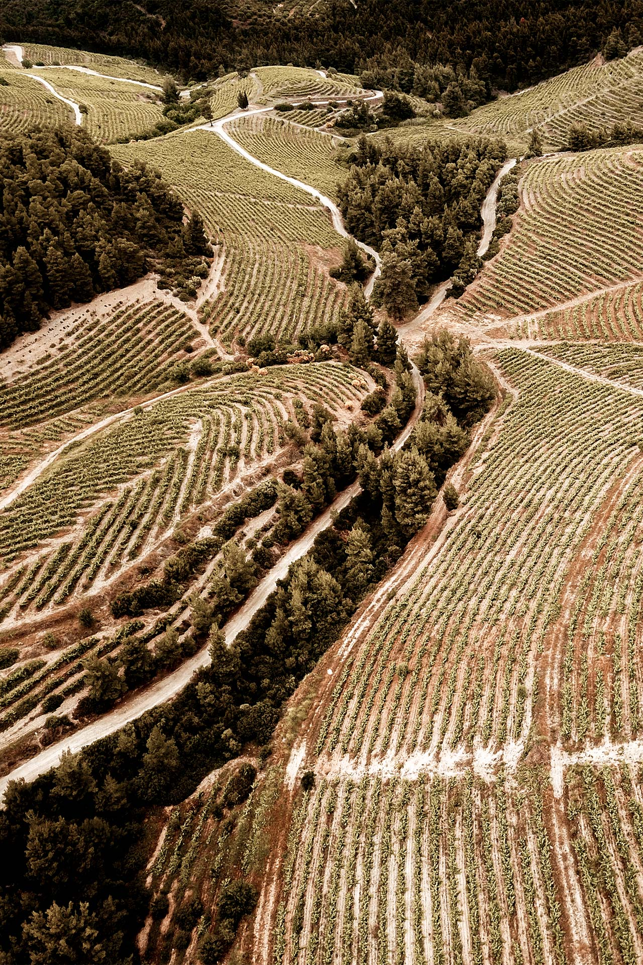 Halkidiki boasts excellent vineyards that, together, offer a wine tour that will change the way you see Greece and its wines-DJI_0465-1