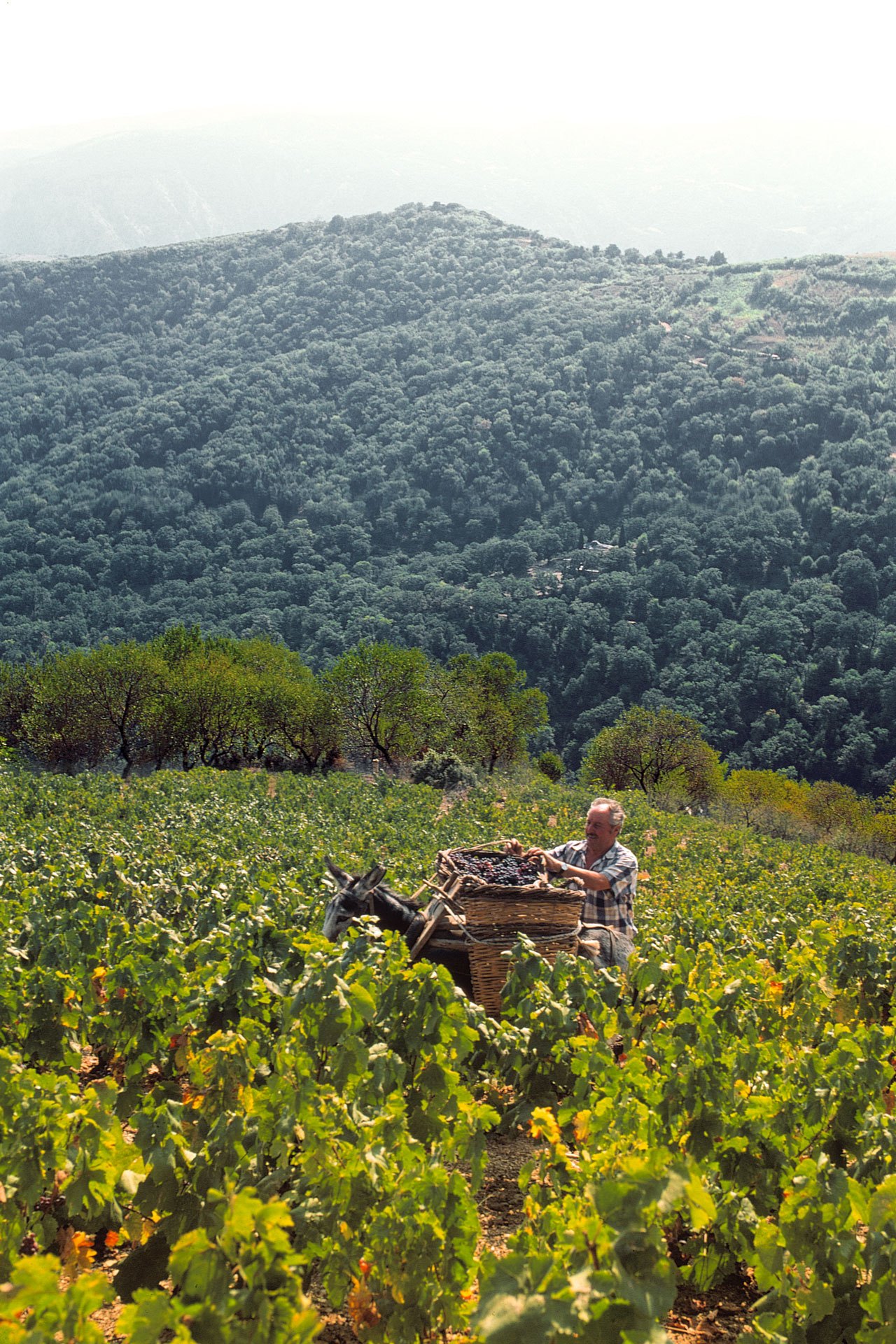 Halkidiki's deep viticulture roots will amaze you