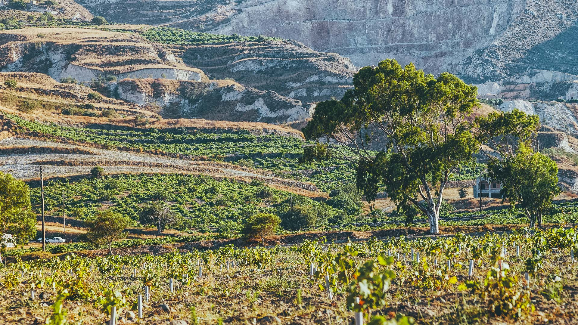 The unique terroir where Santorini vineyards grow