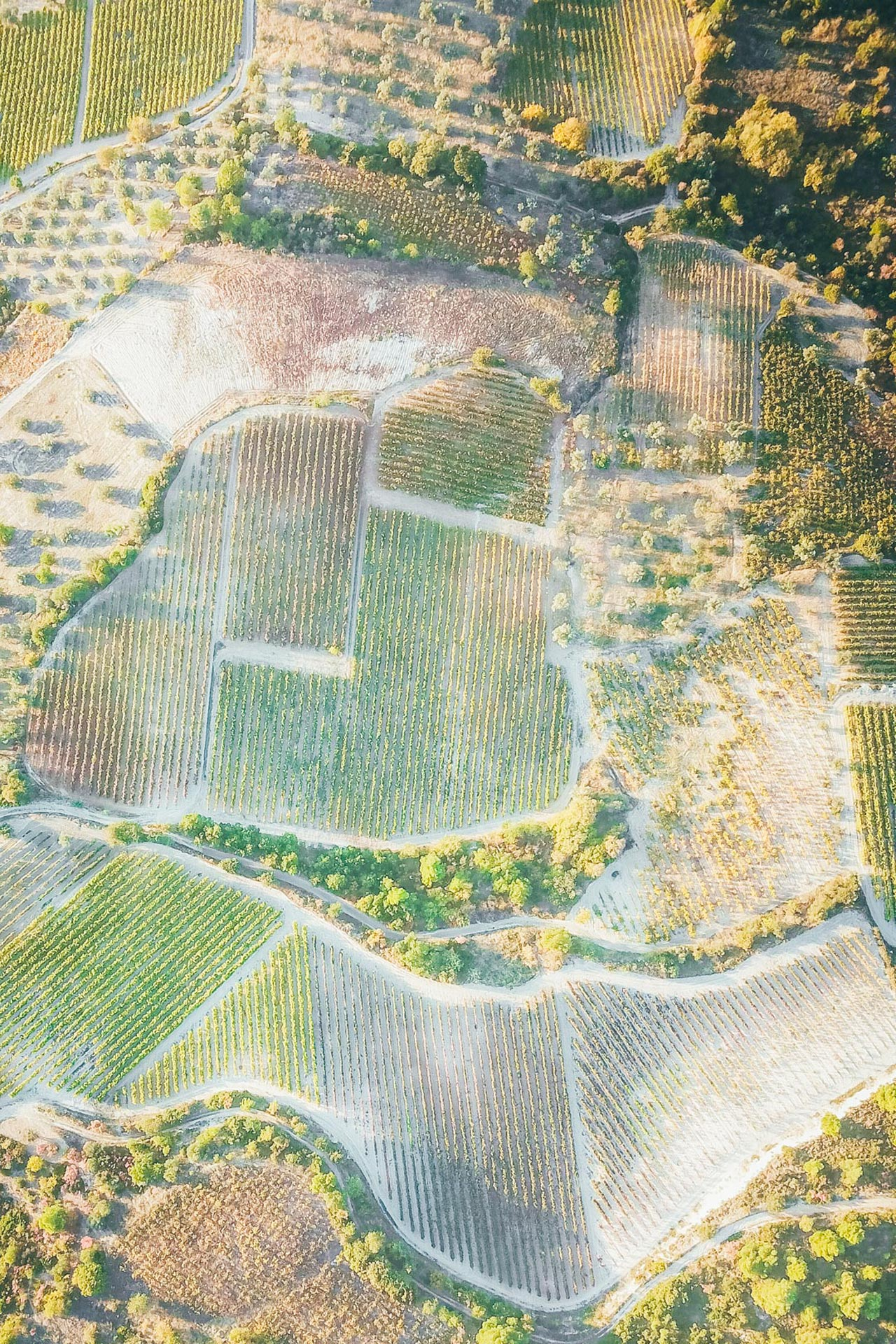 The hillside vineyards of Nemea successfully produce many of Europe's leading grape varieties