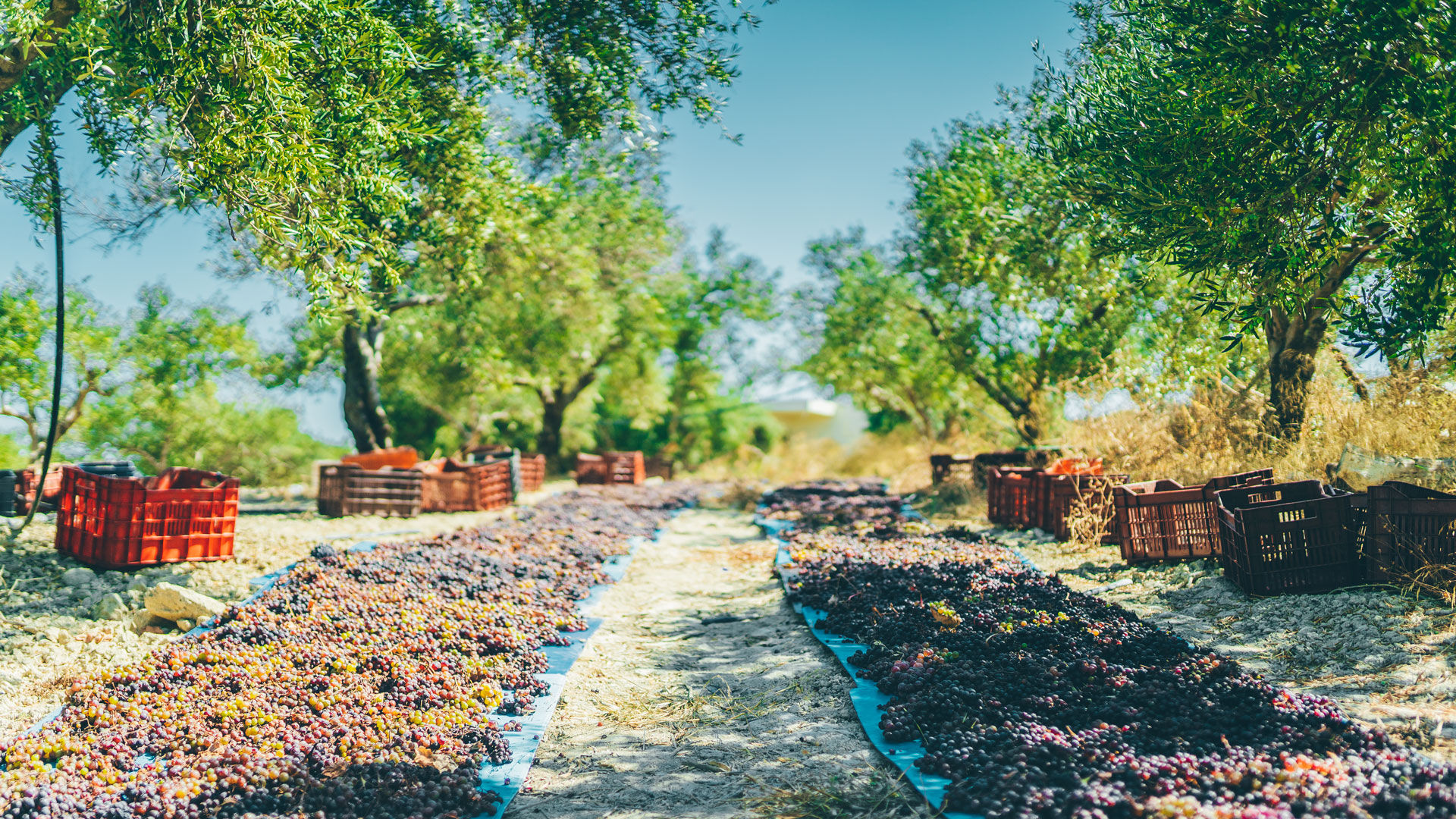 It's worth coinciding your visit to an olive press during the harvest time
