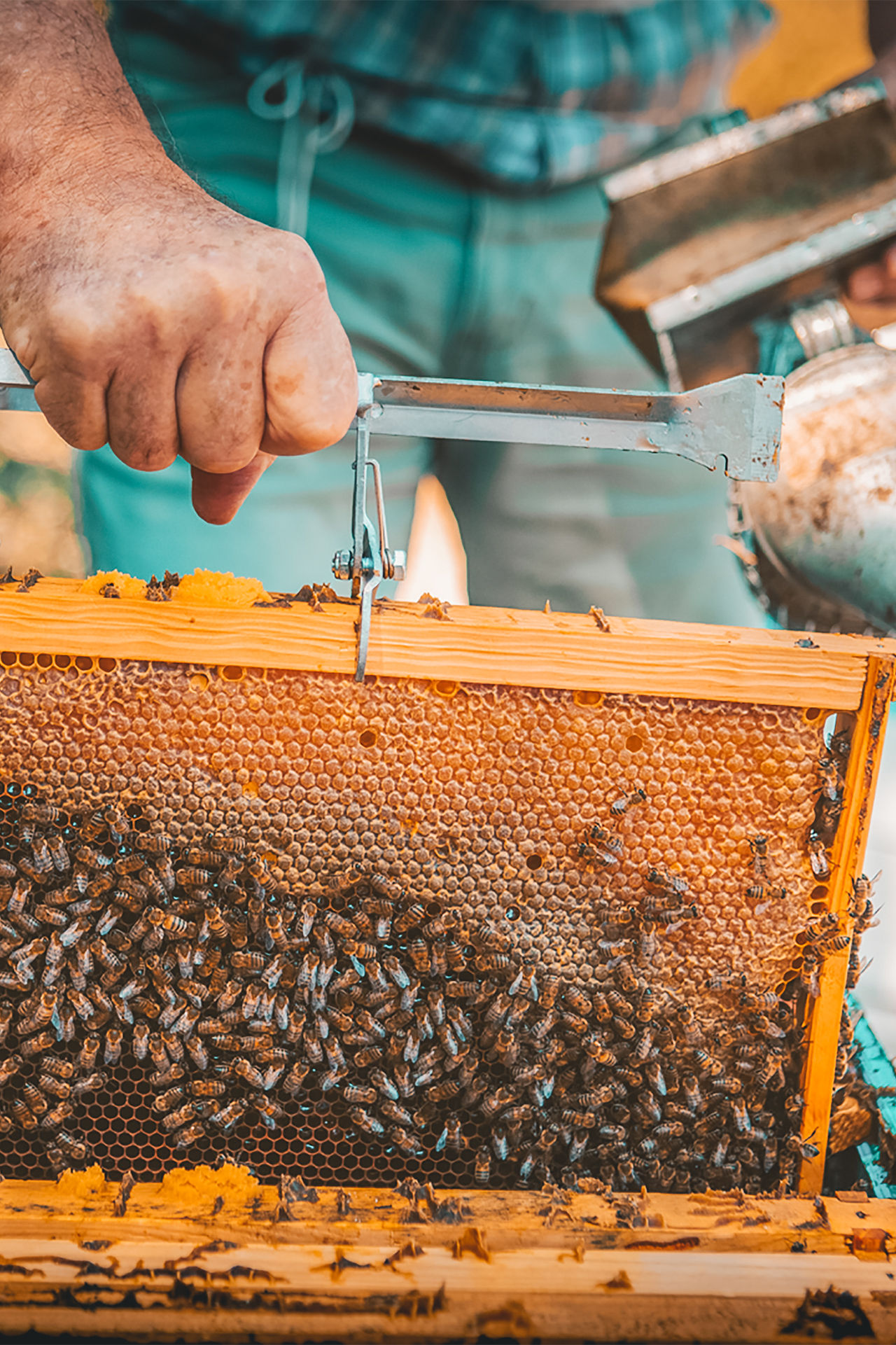 Learn everything about Rhodes' honey by local beekeepers