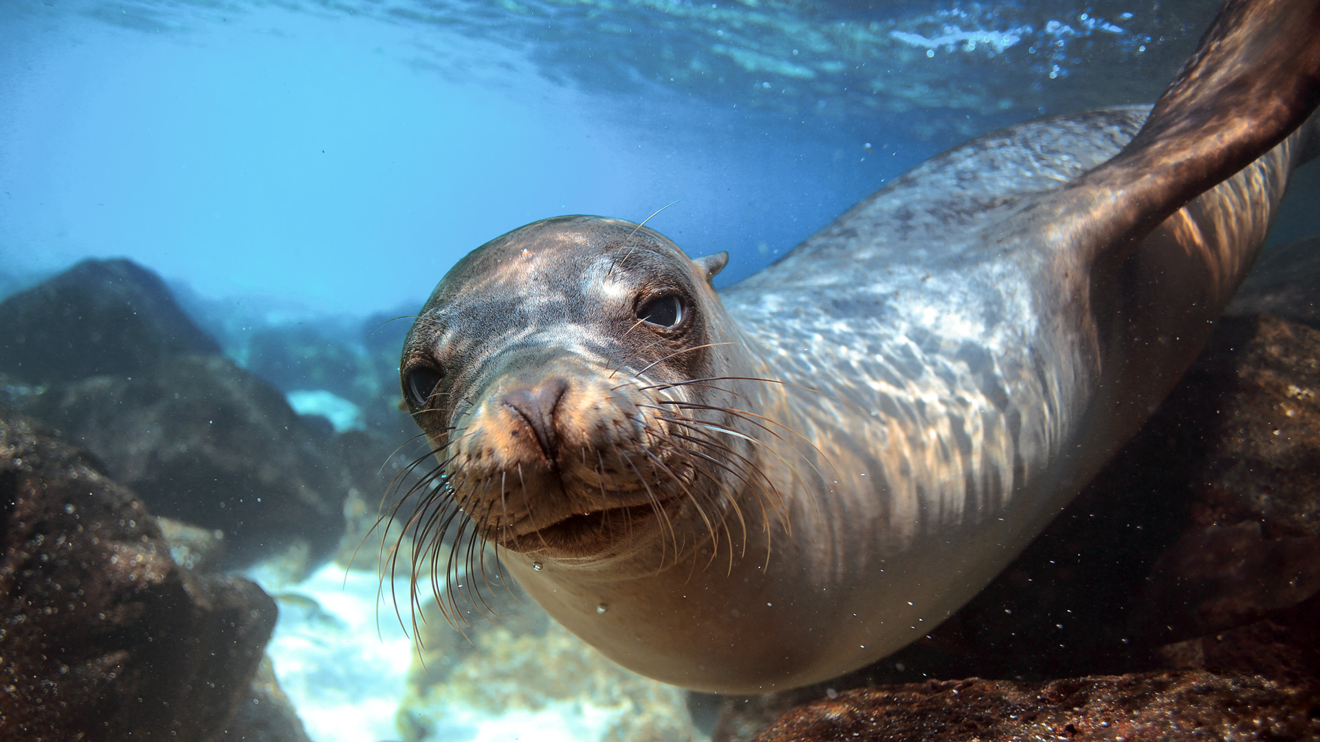 Alonissos, home of the Mediterranean monk seal
