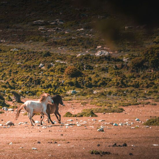 The Skyrian pony can be found running wild on the central plateau
