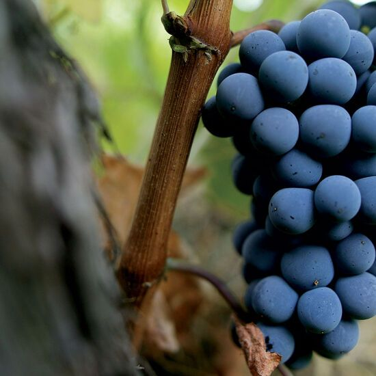 You will be introduced to local grape varieties you probably never knew existed