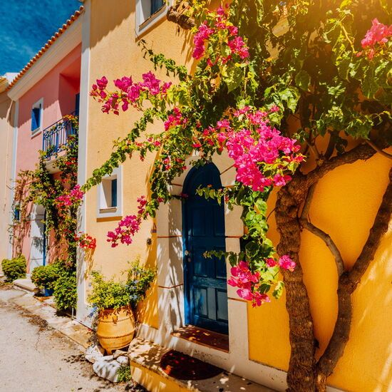 Traditional colorful greek houses in Assos village. Blooming fuchsia plant flowers growing around door.