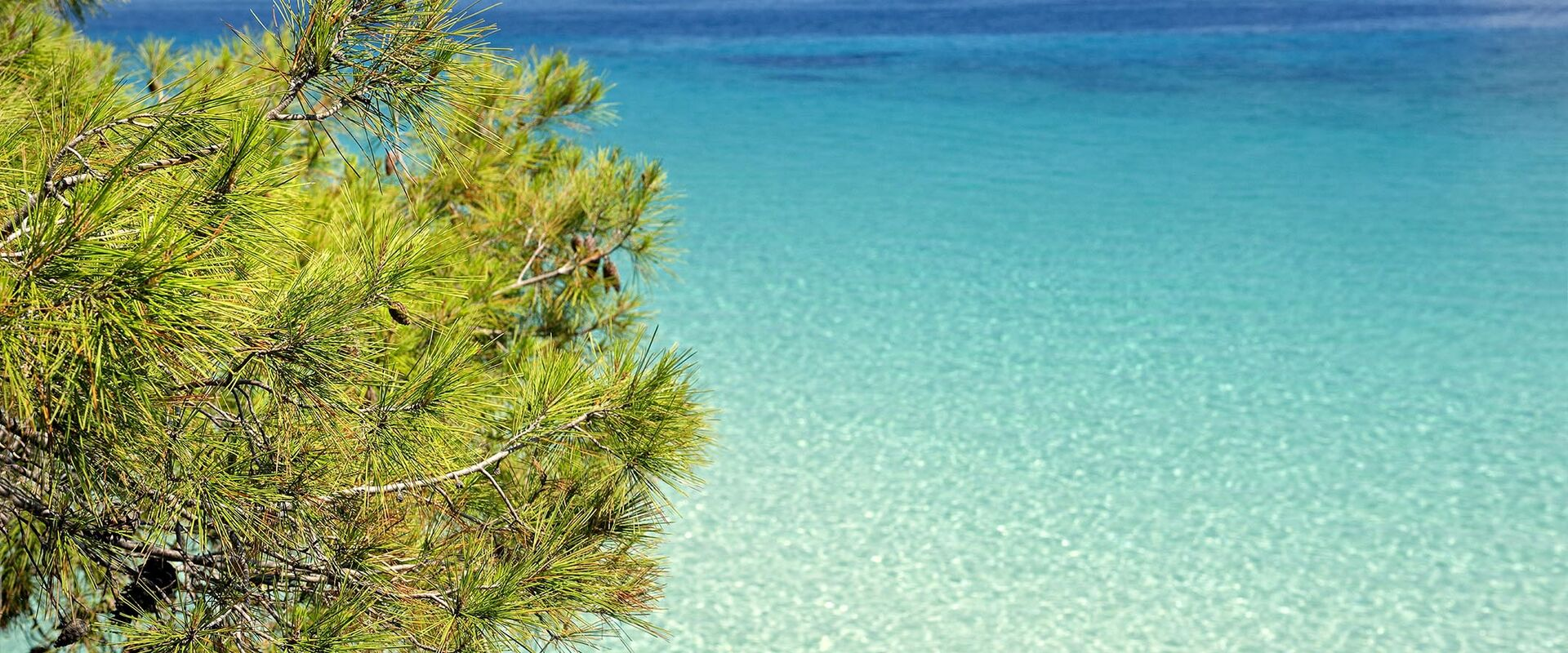 Pines and sea in perfect harmony in Halkidiki
