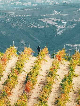 There are plenty of wineries to choose from, in the foothills of the White Mountains and around the Apokoronas villages