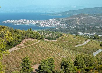 Exploring the wine routes of Halkidiki