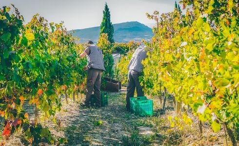 Nemea viniculture and winemaking has centuries-long tradition