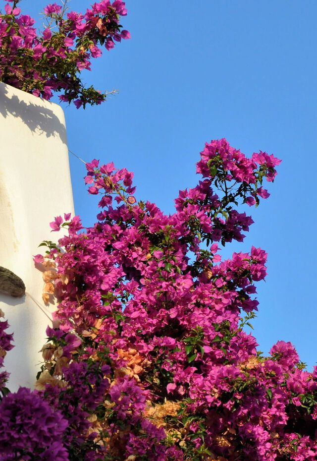 House details, Old Town (Hora) of Alonissos