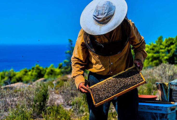 Traditional honey-maker in Halkidiki