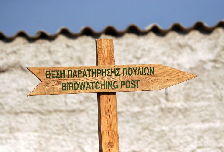 Birdwatching in Lesvos