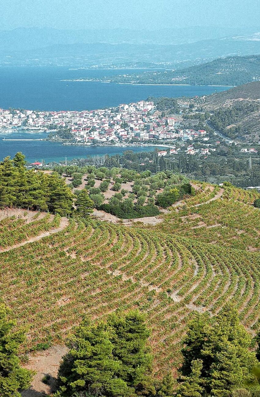 Domaine Porto Karras, the largest organic vineyards in Greece